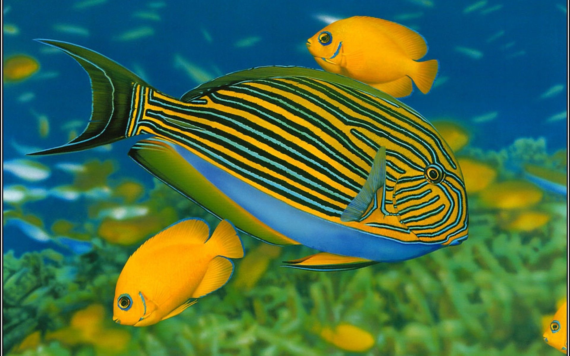 fish - Google Search | Fish | Pinterest | Fish wallpaper, Aquariums ...