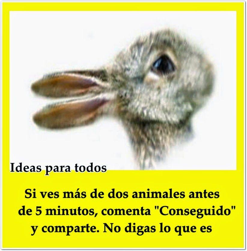 Ideas Para Todos: Busca Los Dos Animales