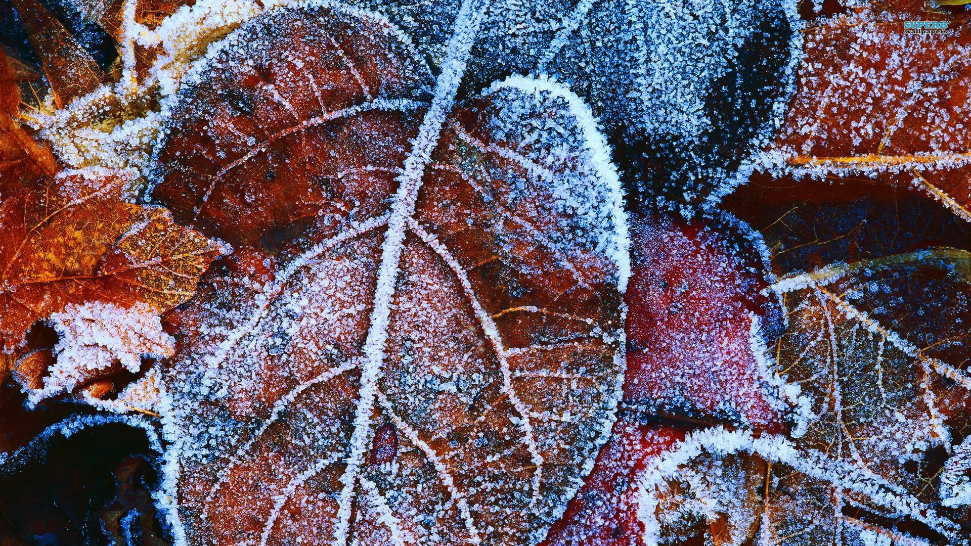 Frosty Autumn Leaves Hdpicorner