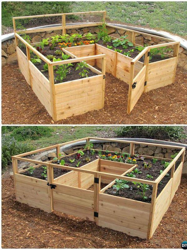 Make a Raised Vegetable Garden Today: How to Plant and Design a Vegetable Garden Today