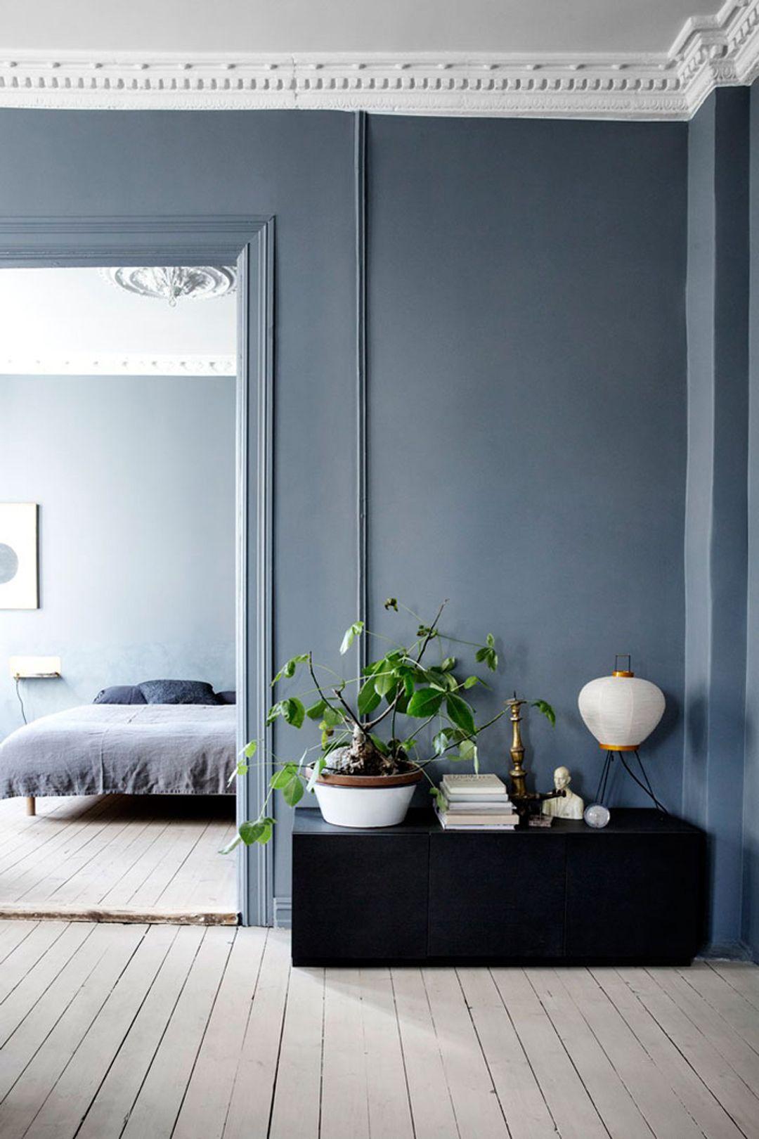Colori Moderni Per Pareti Interne plant against a blue wall   idee per decorare la casa
