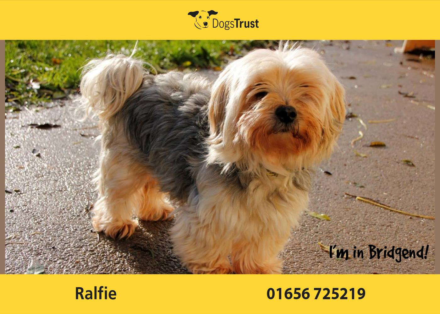 Ralfie Here From Dogs Trust Bridgend Is A Sensitive Chap And He Does Like To Have His Own Way He Loves A Good Run Off Lead In The Fie Dogs Dogs Trust