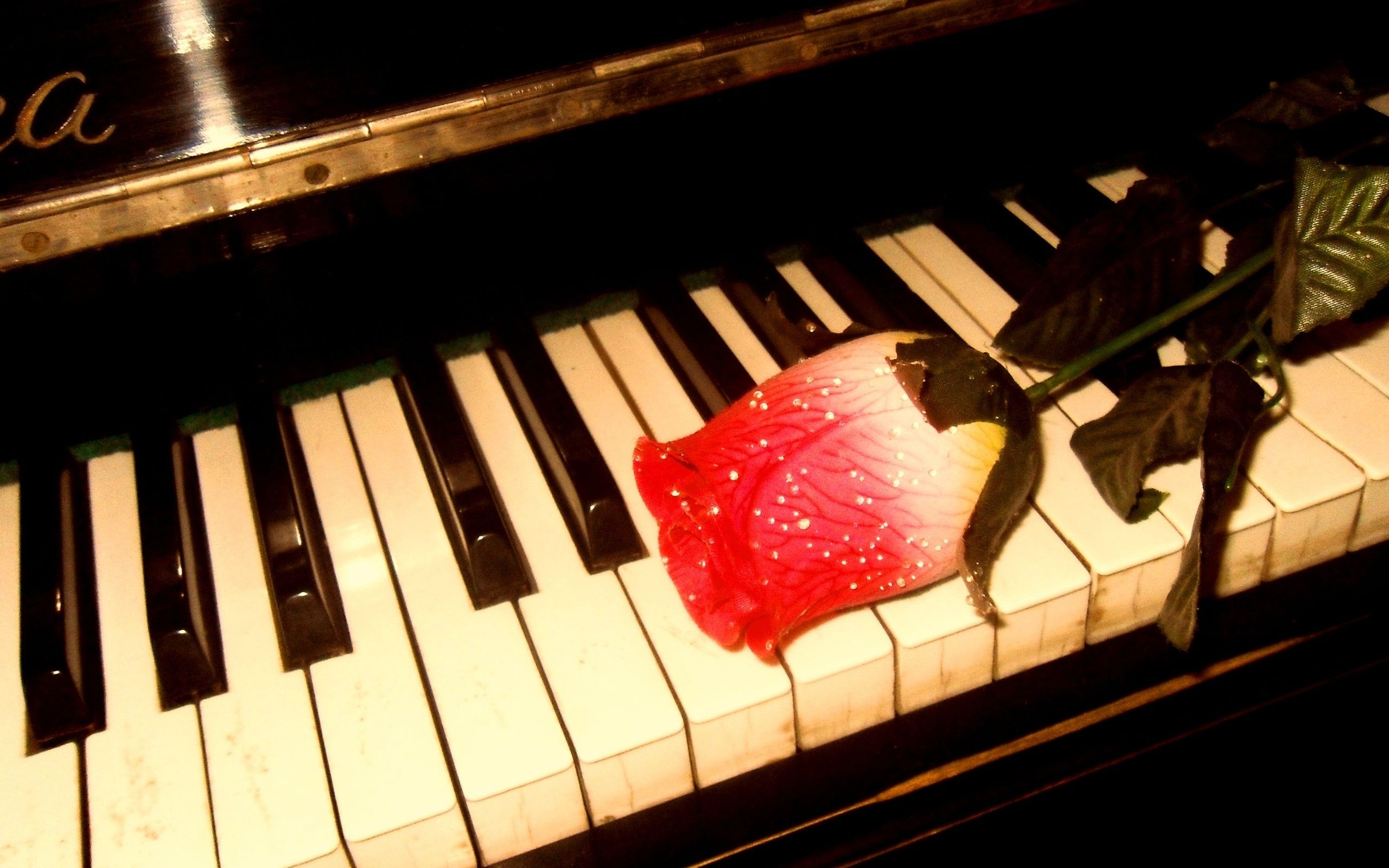 Rose Piano Wallpaper Backgrounds 43835 HD Pictures