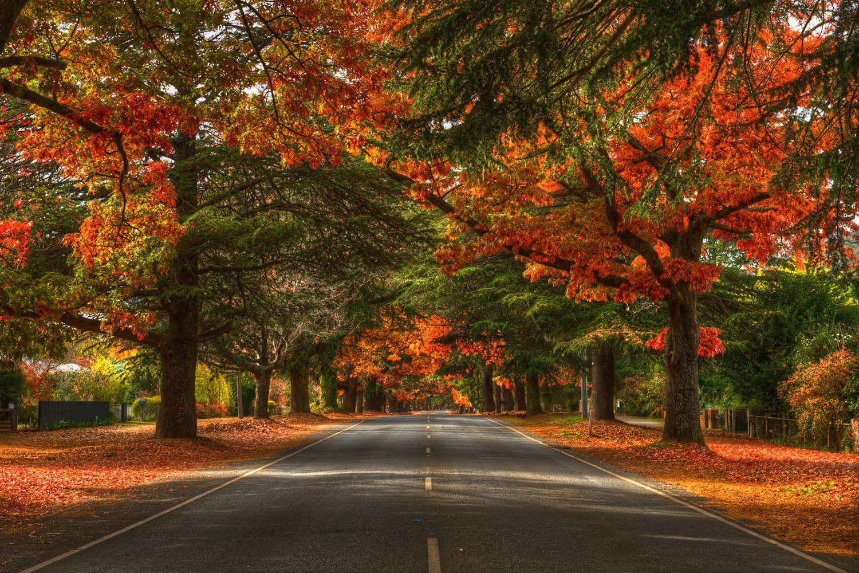 Bright, Victoria, Australia Hitchhike Pinterest