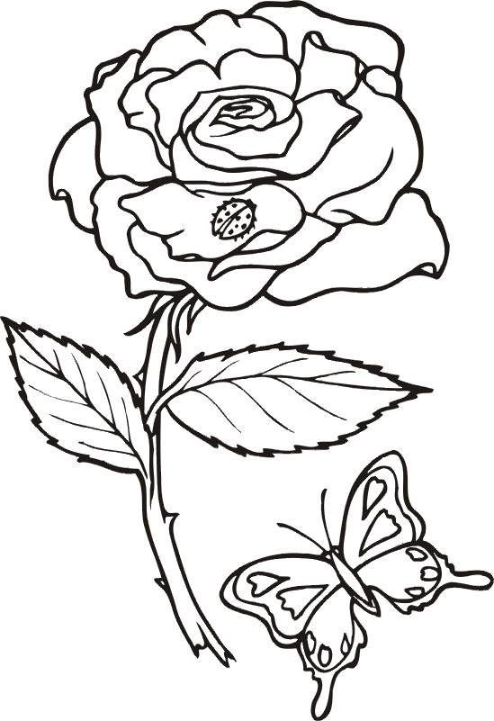 Pin Von Ute Meins Auf Kvetiny Malvorlagen Tiere Malvorlagen Blumen Kostenlose Ausmalbilder