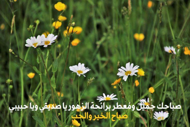 صور صباح الخير واجمل عبارات صباحية للأحبه والأصدقاء موقع مصري Good Morning Flowers Good Morning Arabic Morning Flowers