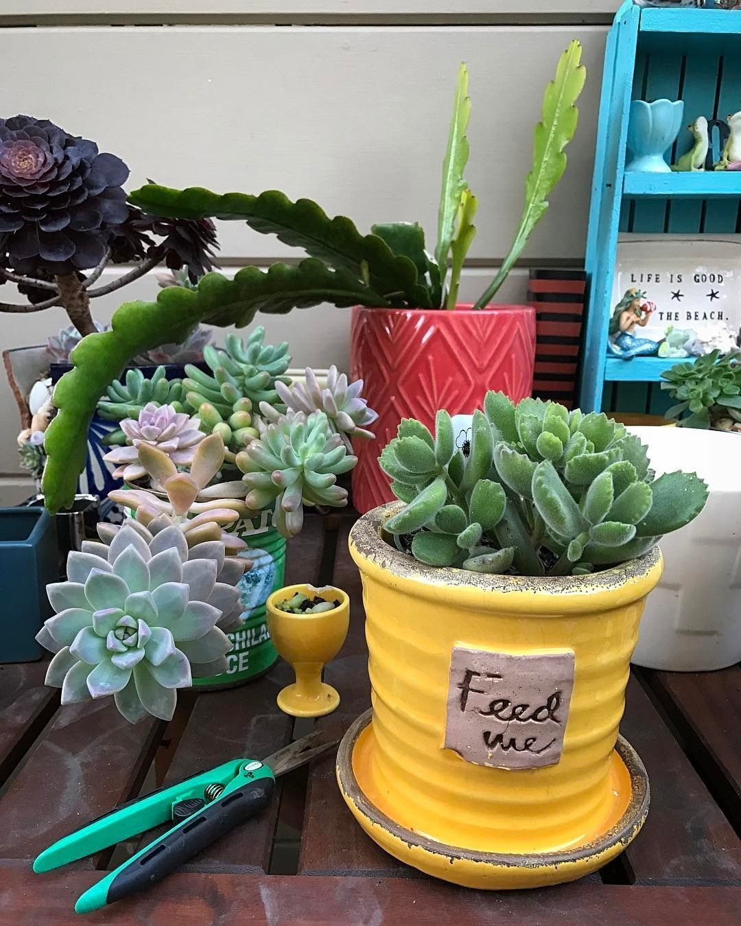 Best Gardening Tools for Succulents/Readers And Succulent