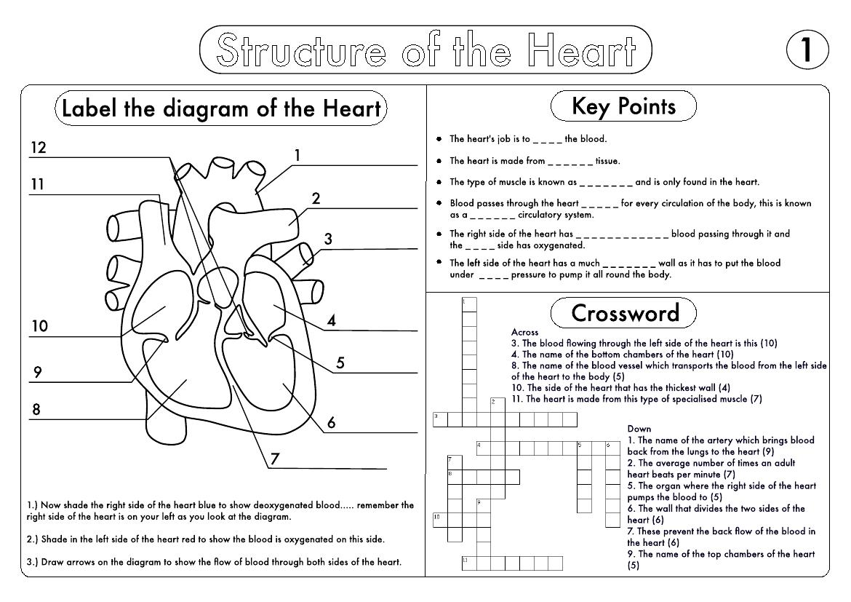 hight resolution of https://dubaikhalifas.com/circulatory-system-5th-grade-worksheets-the-circulatory-system-4th-5th-grade-worksheet/