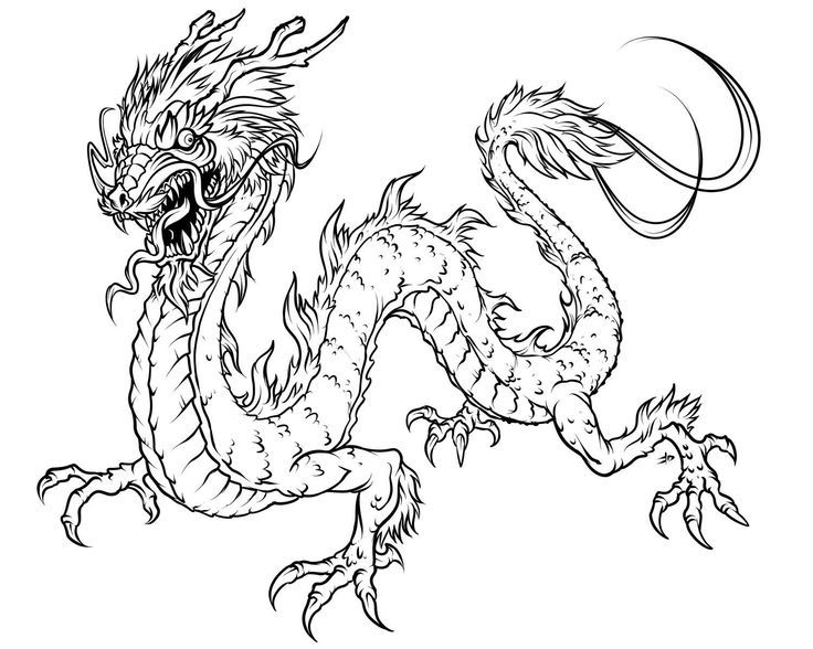 realistic dragon coloring pages for adults bing images - Dragon Coloring Pages For Adults