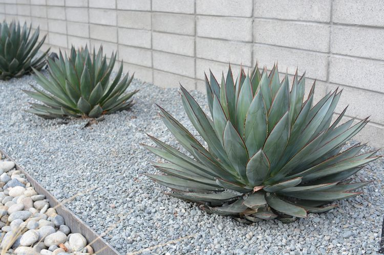 13 Desert Plants To Use When Landscaping Mulch