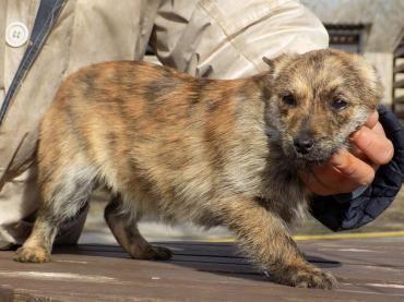 Hund Welpe Mischling Mischling Hundin 4 Monate Ungarn Tiere Suchen Ein Zuhause Haustier Hunde