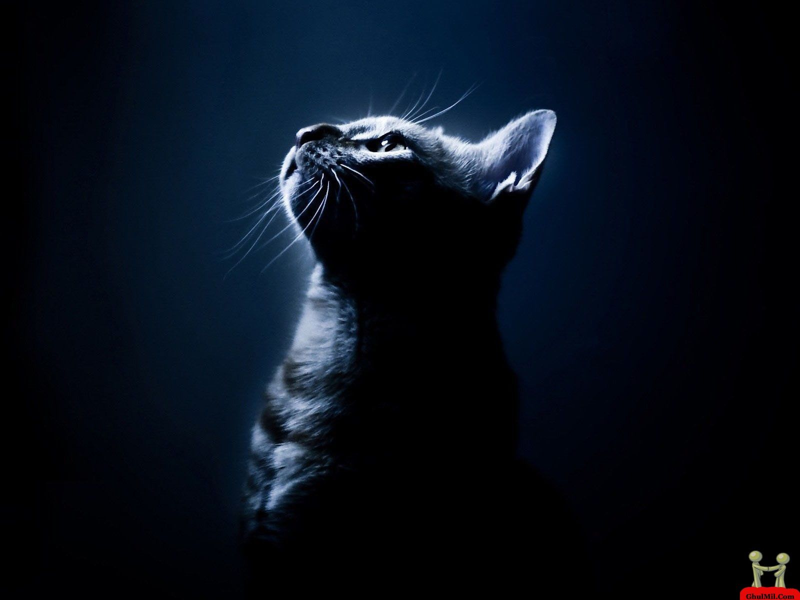 lovely cat hd wallpapers free pictures download hd wallpapers 1920