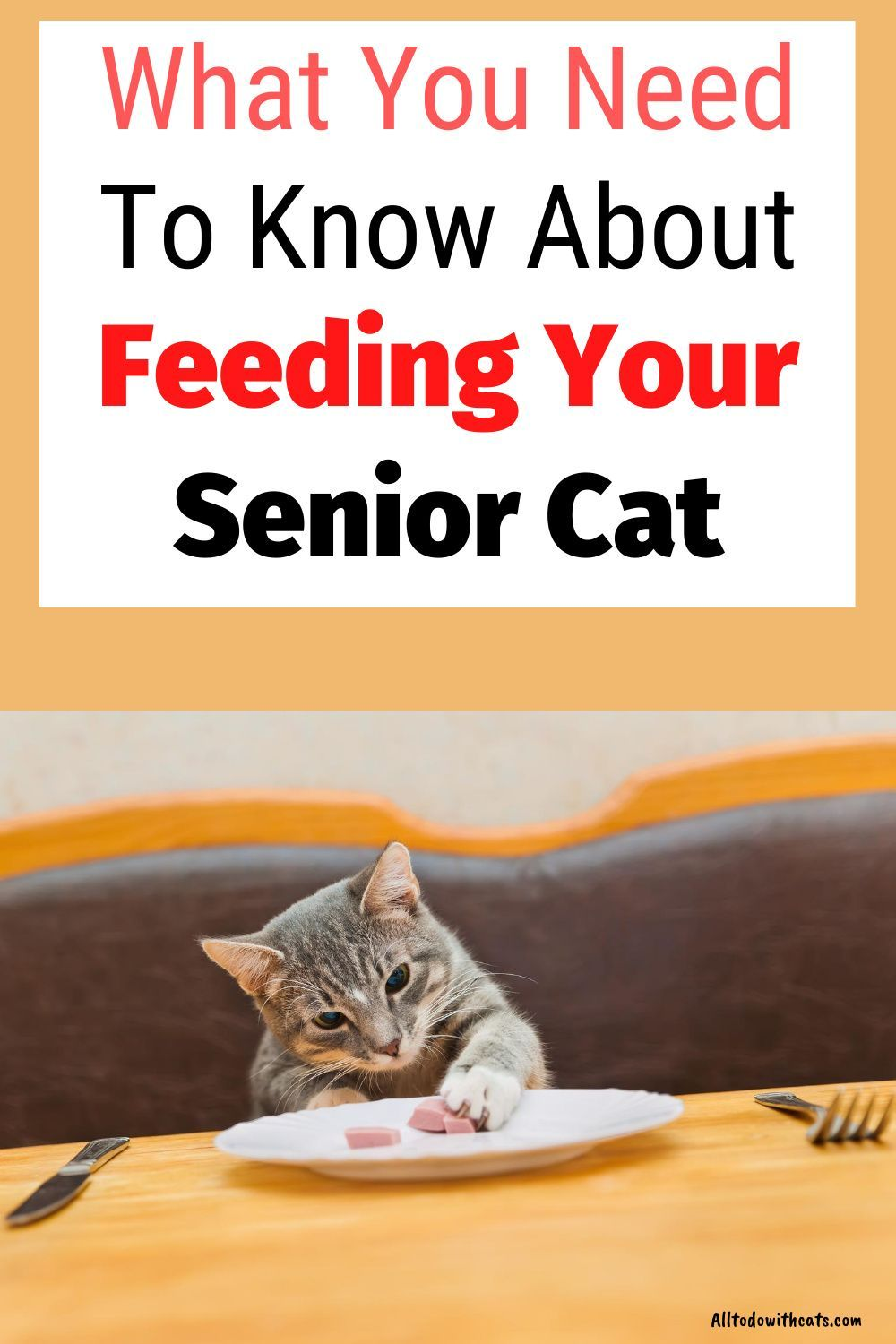 What Is The Best Cat Food For Older Cats Feeding Your Senior Kitty In 2020 Best Cat Food Older Cats Older Cats Care