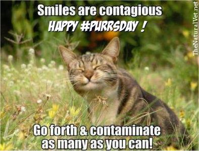 Image result for Happy purrs day images