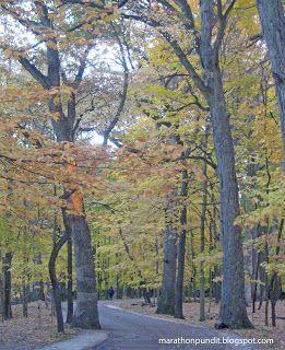 Morton Grove fall colors: Maples and sunset oaks #mortongrove Fall colors--maples--in Morton Grove, Illinois' Miami Woods. #mortongrove