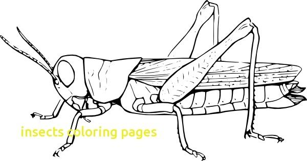 Insect Clipart Colouring Picture 89456 Insect Clipart Di 2020 Hewan Gambar Hitam