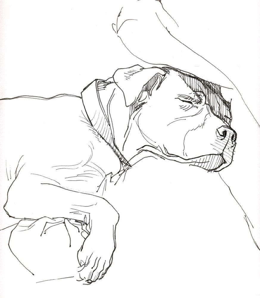 Sleeping Pitbull Coloring Pages for Dog Lovers   Educative ...