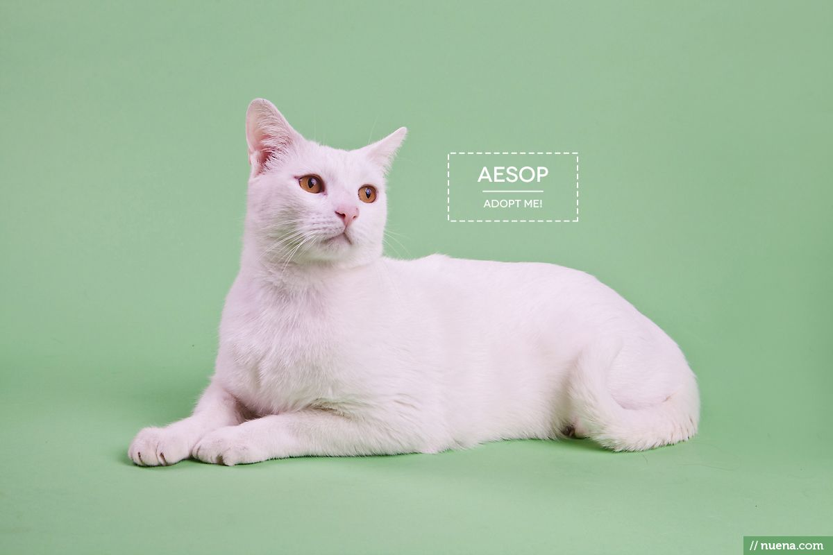 Aesop Available For Adoption At Berkeley Humane Society Humane Society Cats And Kittens Cats
