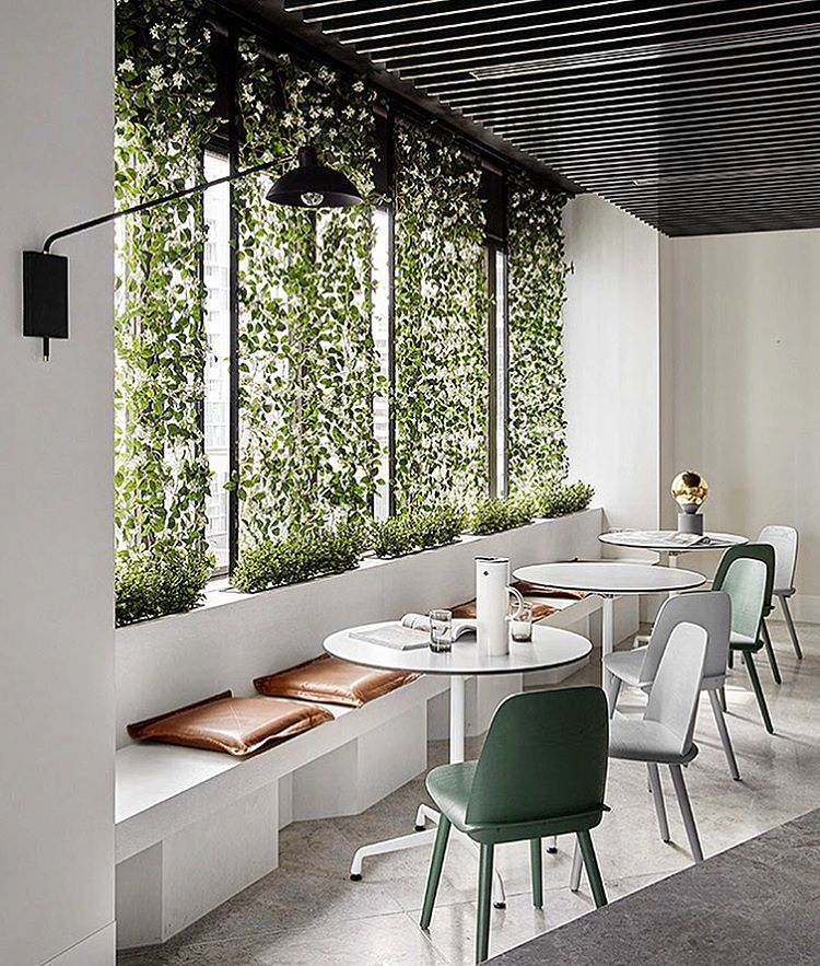 Plant screen divisi n con plantas office pantry for Areas de una oficina