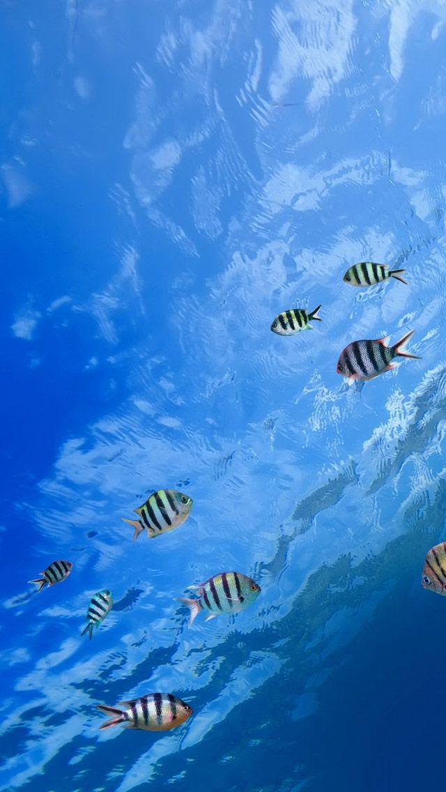 Underwater Tropical Fish Underwater Tropical Fish Iphone 5s Wallpaper Download I Underwater Wallpaper Iphone Wallpaper Tropical Iphone Wallpaper Underwater
