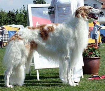 Los Perros Más Grandes Del Mundo El Perro Más Grande Del Mundo Perros Perros Enormes