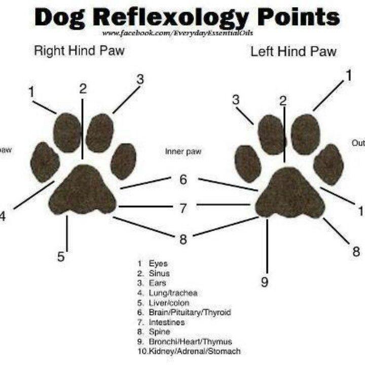 Hunde Reflexzonen Pfoten   Lesenswertes für Hundehalter   Hunde ...