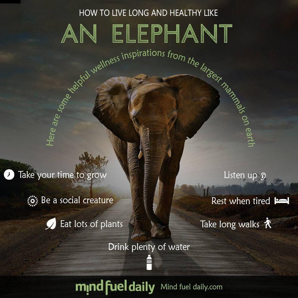 Pin by carol uchytil on animals elephant live long