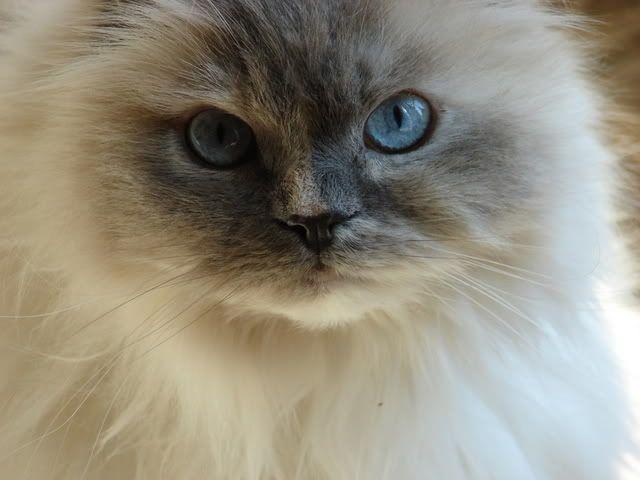 Just Like My Baby Kitty Baby Cats Pretty Cats Animals Beautiful