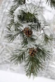 """Képtalálat a következőre: """"havas karácsonyi táj"""""""