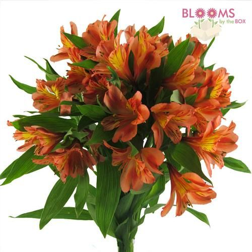 Wholesale Alstroemeria Orange Peruvian Lily Lily Of The Incas Alstromeria Orange Wedding Flowers Fresh Flowers Arrangements Peruvian Lilies
