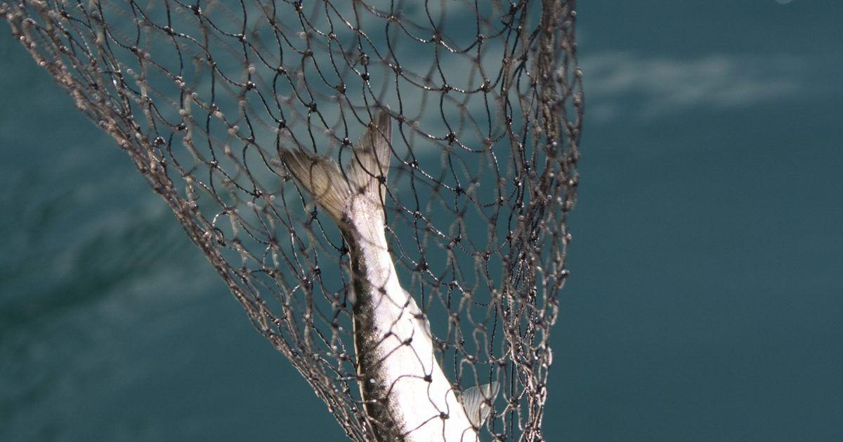 Por Que Minha Agulha Quebra Quando Costuro Redes De Pesca Rede Pesca Nós E Amarras