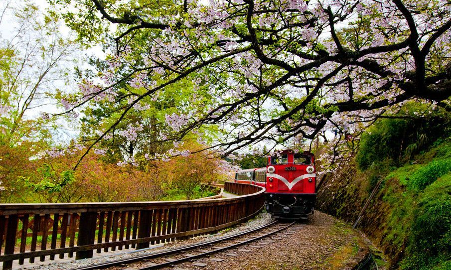 Cherry Blossom In Taiwan 2021 Forecast The Best Time 8 Best Places To See Cherry Blossoms In Taiwan Living Nomads Travel Tips Guides News Informat Laos Travel Travel Outdoors Travel