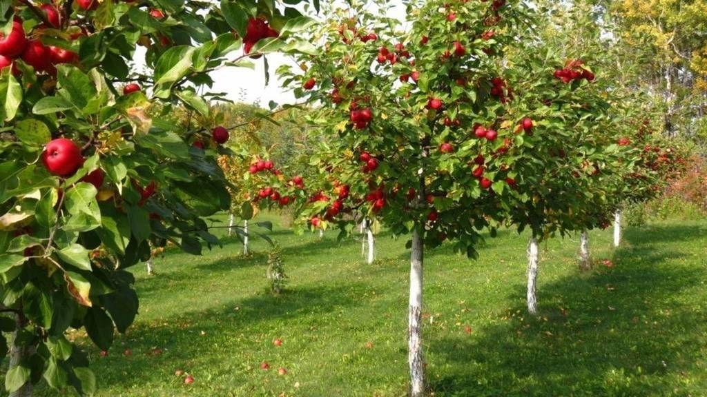Mark Shepard Case Study 24 Fruit Tree Garden Fruit Garden Orchard Design