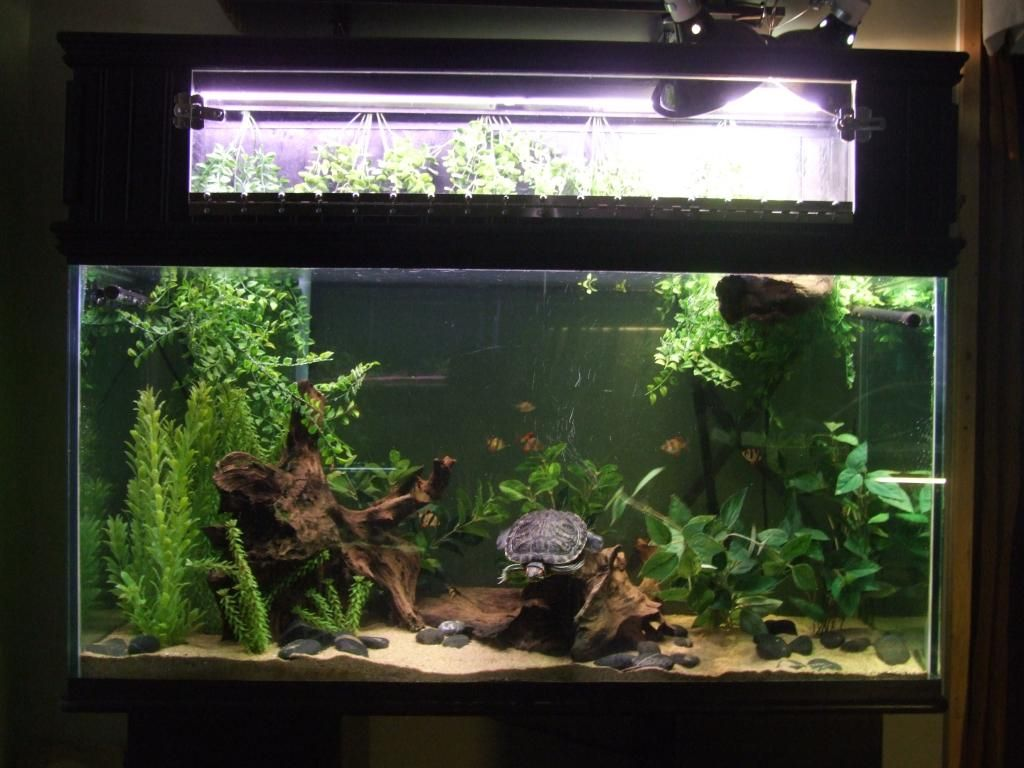 90 Gallon Planted Aquarium With RES Turtle Aquariums And