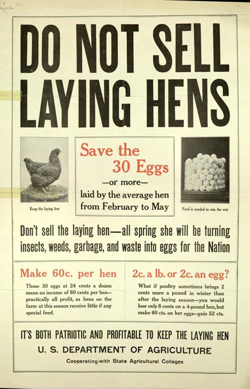 It's both patriotic and profitable to keep the laying hen