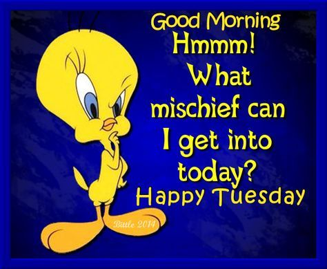 Tweety Bird Good Morning Happy Tuesday Tuesday Quotes Good Morning Funny Good Morning Memes Happy Tuesday Quotes