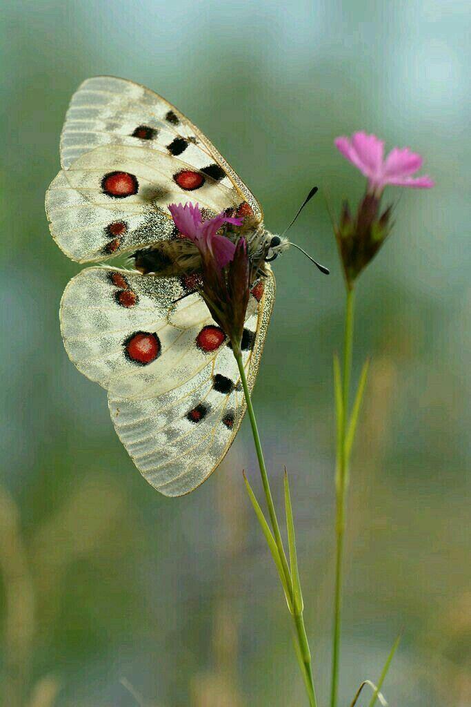 #butterflies #schmetterling #blumen #musicnonstop