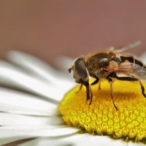 Da lunedì 19 gennaio è operativa l'anagrafe delle api, con la possibilità per gli apicoltori di registrarsi sul portale del Sistema informativo veterinario, accessibile dal portale del Ministero della Salute.