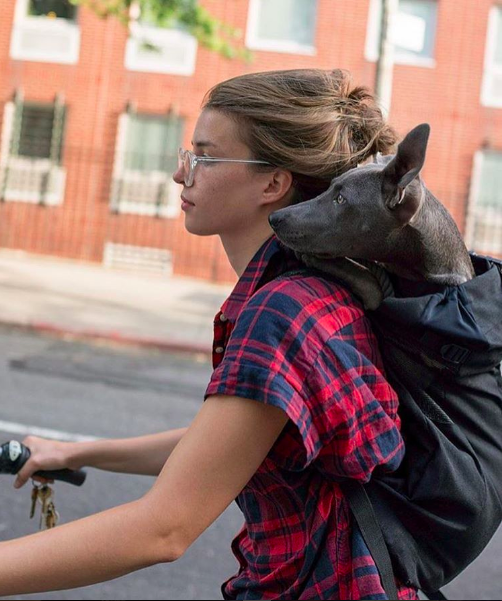 Bike rides with your dog in the best dog backpack! k9