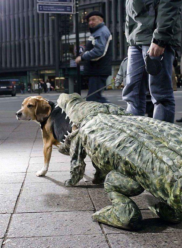 Perro disfrazado de cocodrilo