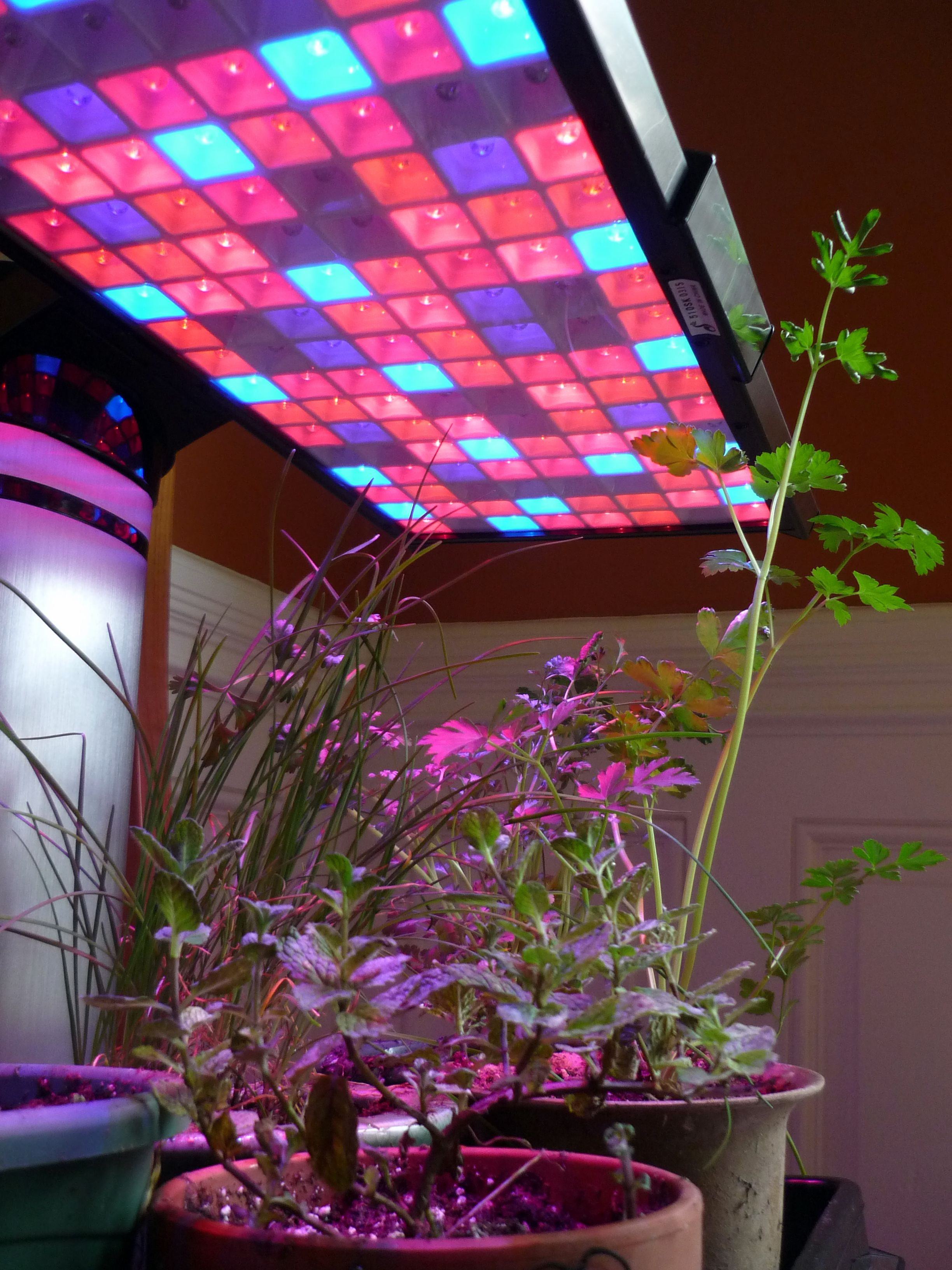 horticultural light for lights in led netherlands a rapidly young now plants greenhouse sector the growing grow