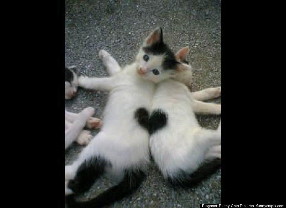 25 Perfectly Timed Photos Gatos Bonitos Fotos Divertidas De Gatos Gatitos Adorables