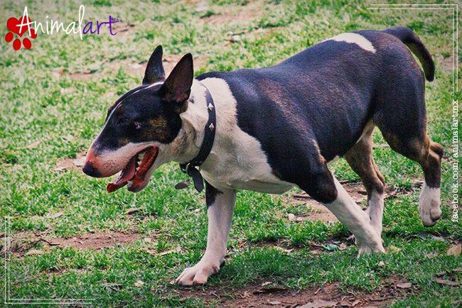 10 Signos que pueden indicar cáncer en nuestro Perro. #animales #perros #mascotas