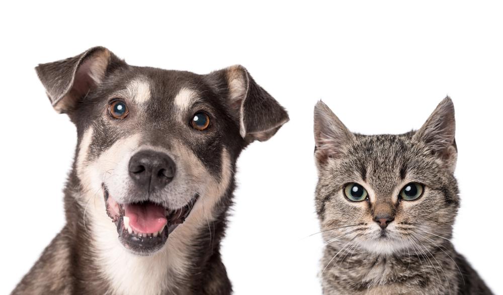 Dog And Cat Love Dog Clip Art Cartoon Dog Cat Clipart