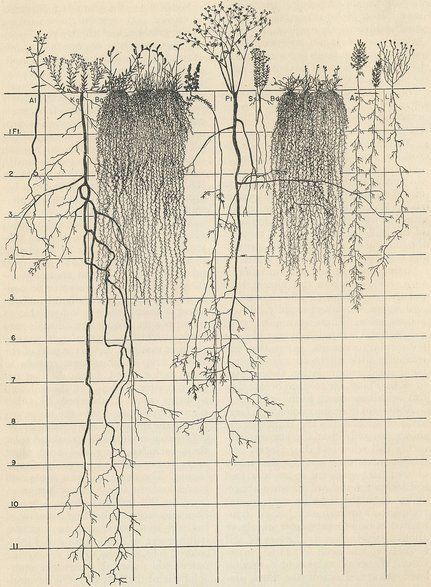 """Root Bound """"Root bound,"""" my mother said, texting m"""