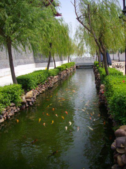 Koi pond garden ponds and koi pinterest koi pond for Garden pond life