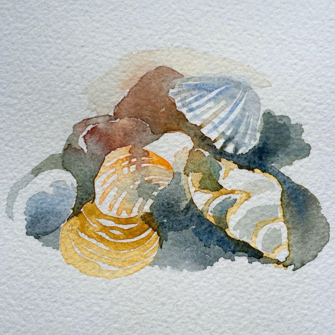 Sea shells - watercolour by Marie Åhfeldt, Mås Illustra