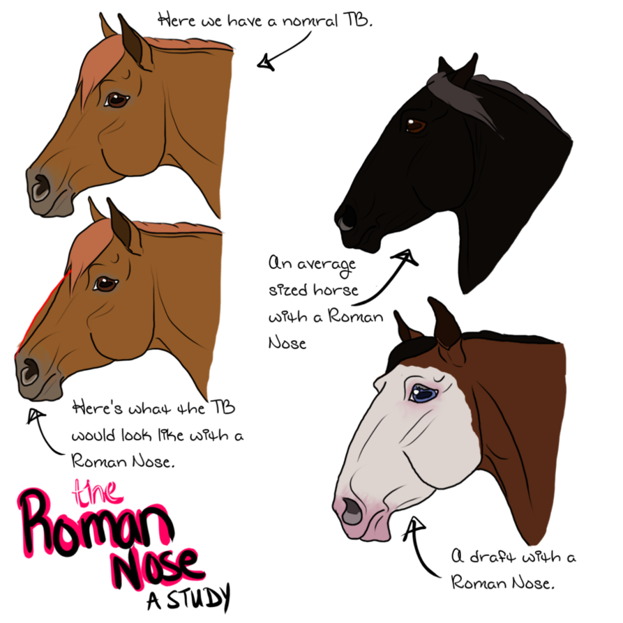 The Roman Nose A Study Horse Facts Roman Art Reference [ 894 x 893 Pixel ]