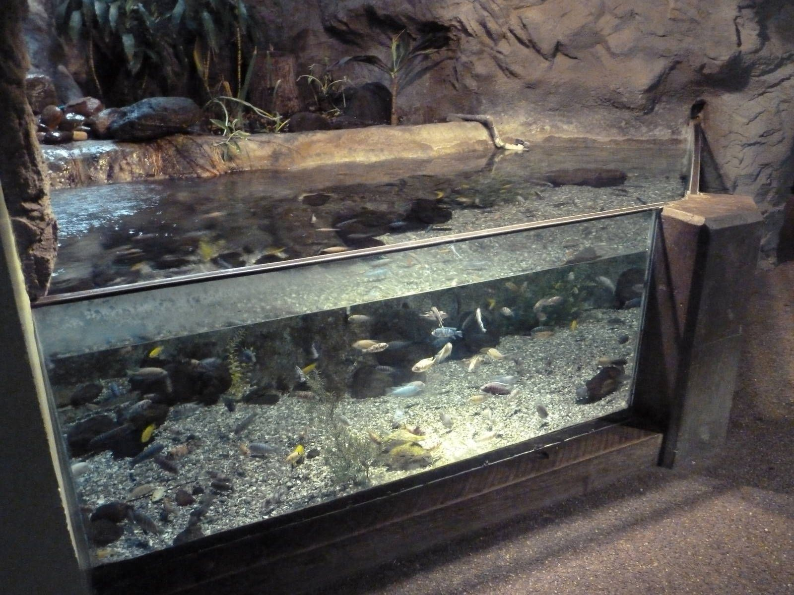 Neat cichlid tank 3d rock elements and silk plants