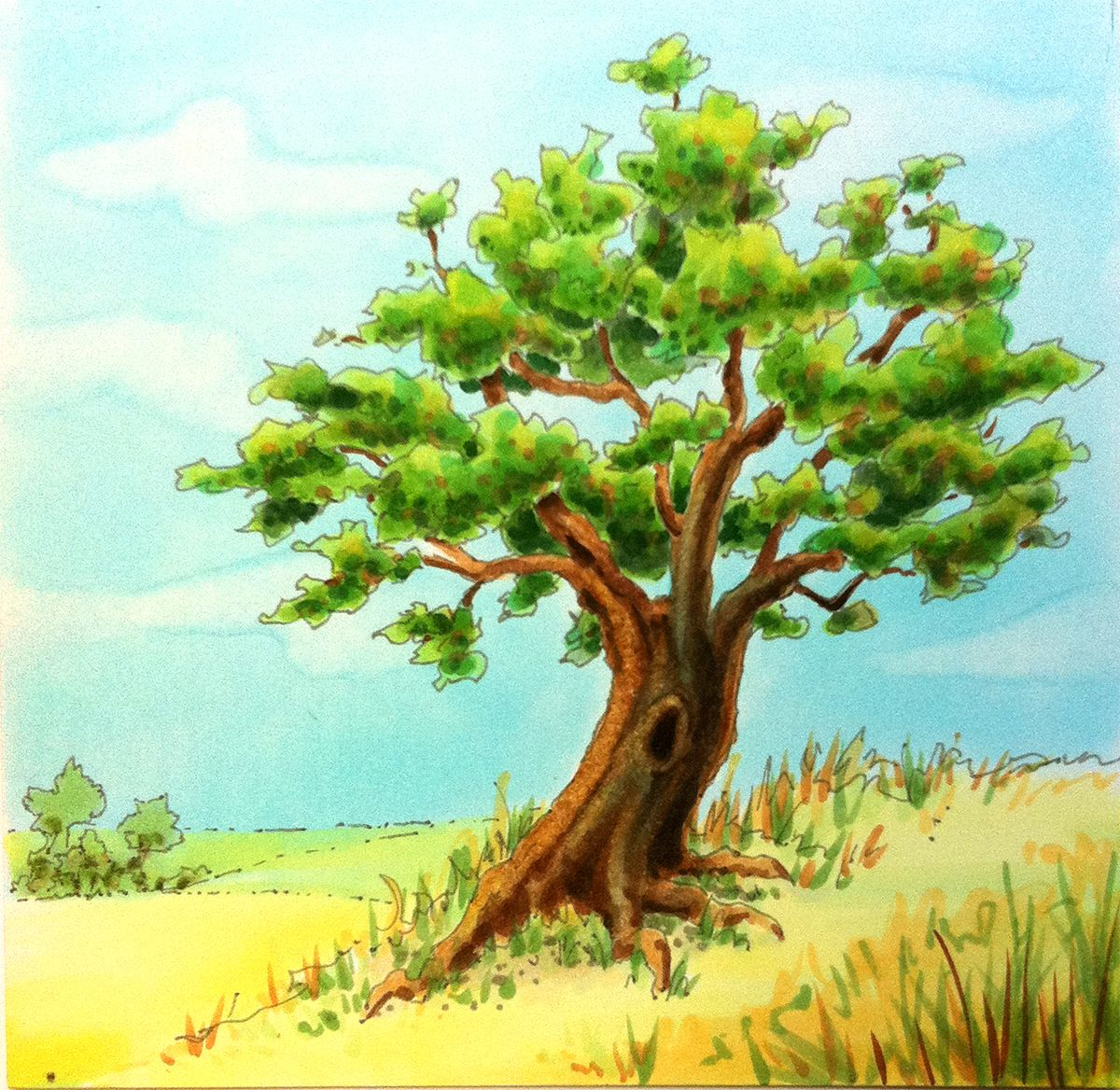 Картинки нарисованные дуб